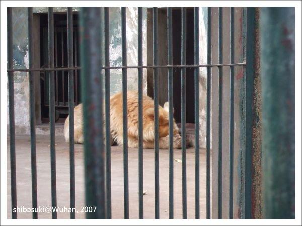20071219_Wuhan-12_Zoo_1.JPG