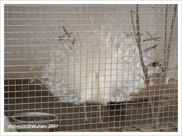 20071219_Wuhan-14_Zoo_1.JPG