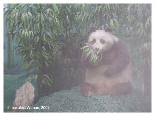 20071219_Wuhan-16_Zoo_1.JPG