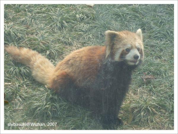 20071219_Wuhan-20_Zoo_1.JPG