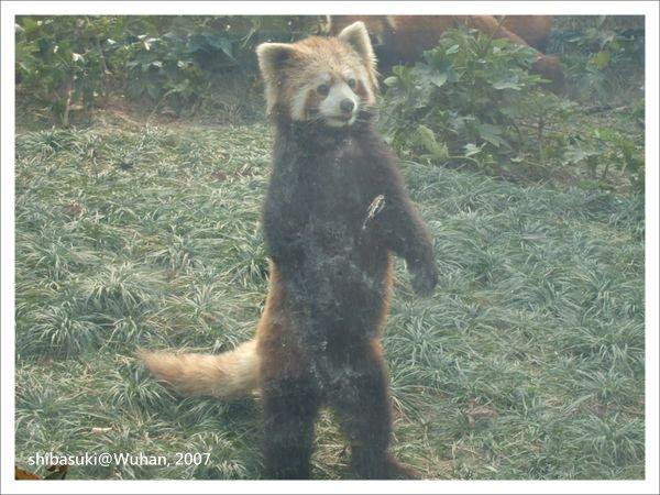 20071219_Wuhan-21_Zoo_1.JPG