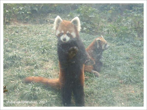 20071219_Wuhan-23_Zoo_1.JPG