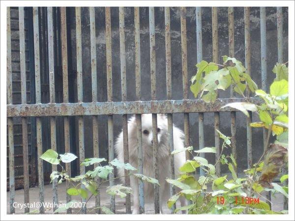 20071219_Wuhan-29_Zoo_1.JPG