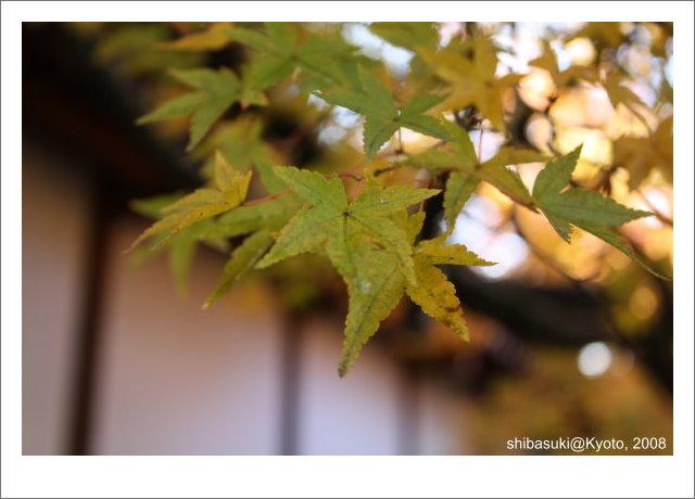 20081125_Kyoto-8_永觀堂.jpg