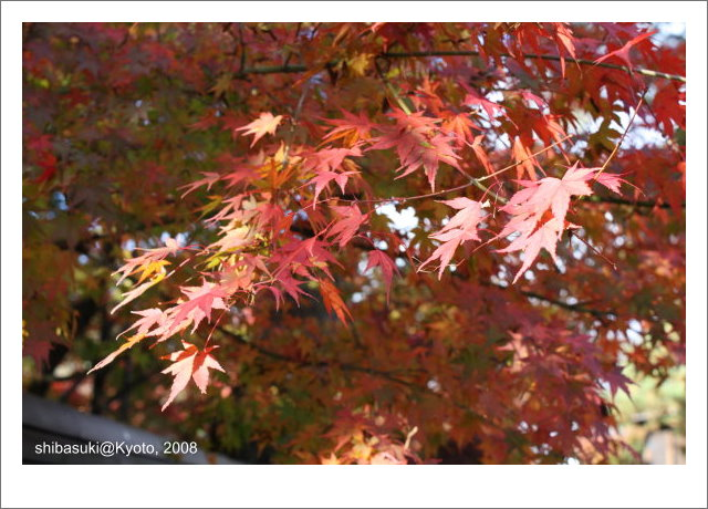 20081125_Kyoto-15_永觀堂.jpg