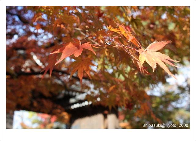 20081125_Kyoto-22_永觀堂.jpg