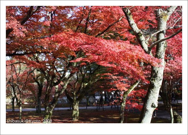 20081125_Kyoto-61_南禪寺.jpg