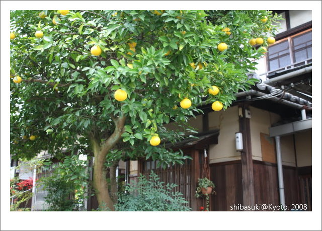 20081125_Kyoto-163.jpg