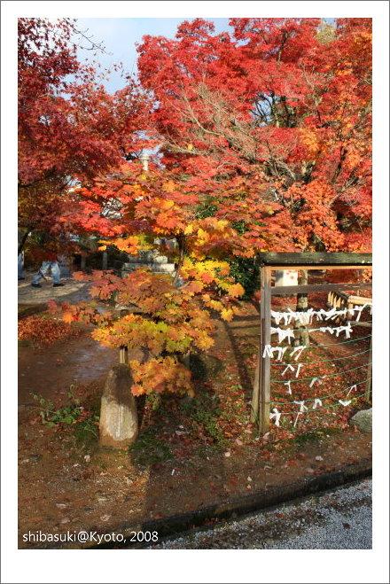 20081125_Kyoto-205_真如堂.jpg