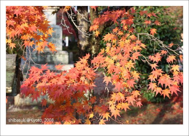 20081125_Kyoto-208_真如堂.jpg