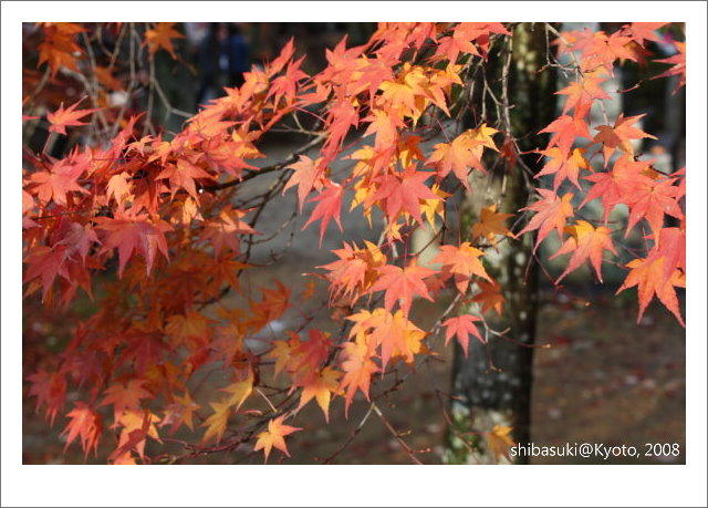 20081125_Kyoto-210_真如堂.jpg
