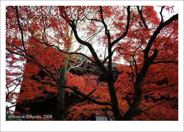 20081125_Kyoto-211_真如堂.jpg