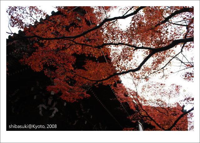 20081125_Kyoto-212_真如堂.jpg