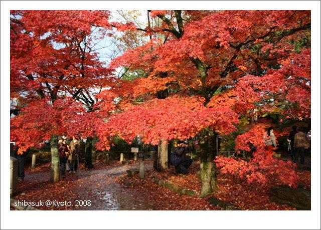 20081125_Kyoto-216_真如堂.jpg