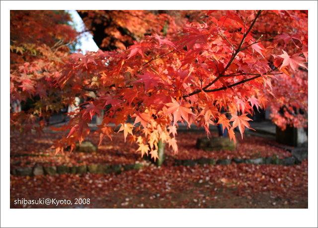 20081125_Kyoto-217_真如堂.jpg