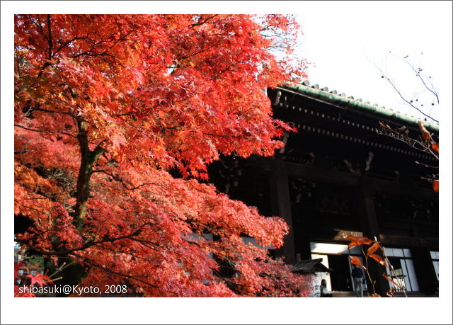 20081125_Kyoto-220_真如堂.jpg