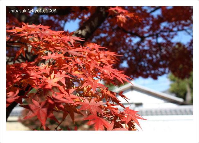 20081126_Kyoto-20_嵐山天龍寺.JPG