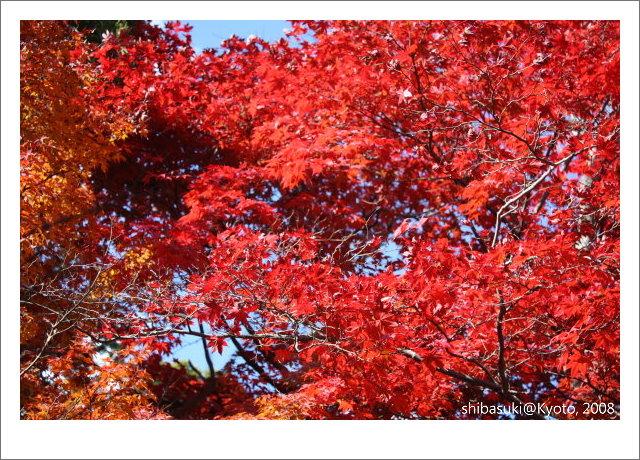 20081126_Kyoto-30_嵐山天龍寺.JPG