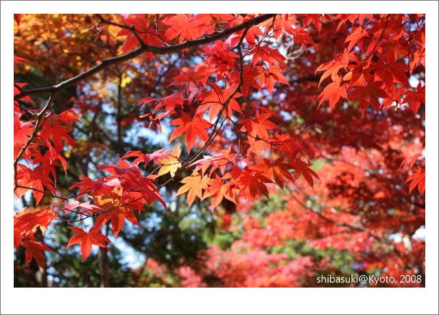 20081126_Kyoto-31_嵐山天龍寺.JPG