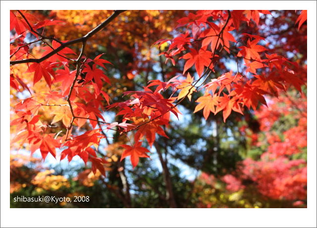 20081126_Kyoto-32_嵐山天龍寺.JPG