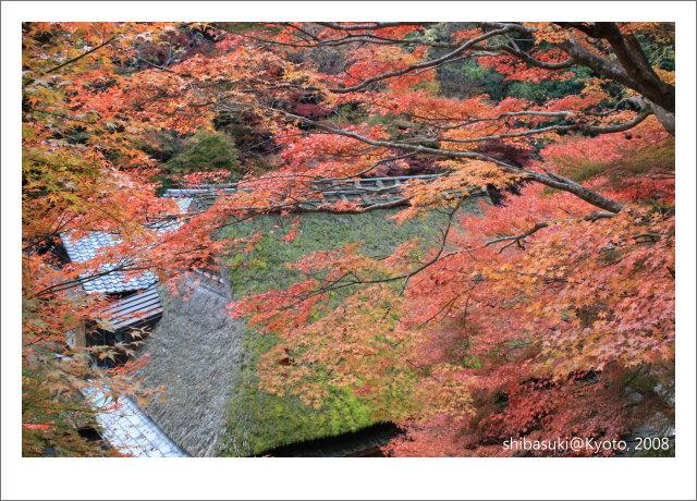 20081126_Kyoto-132_奧嵯峨(鳥居本).JPG