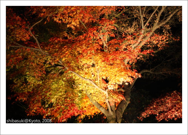 20081126_Kyoto-283_清水寺.JPG