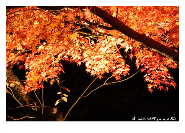 20081126_Kyoto-371_清水寺.JPG