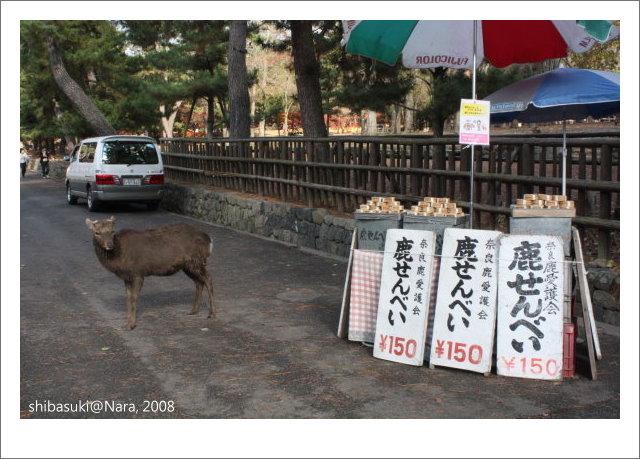 20081128_奈良-15.JPG
