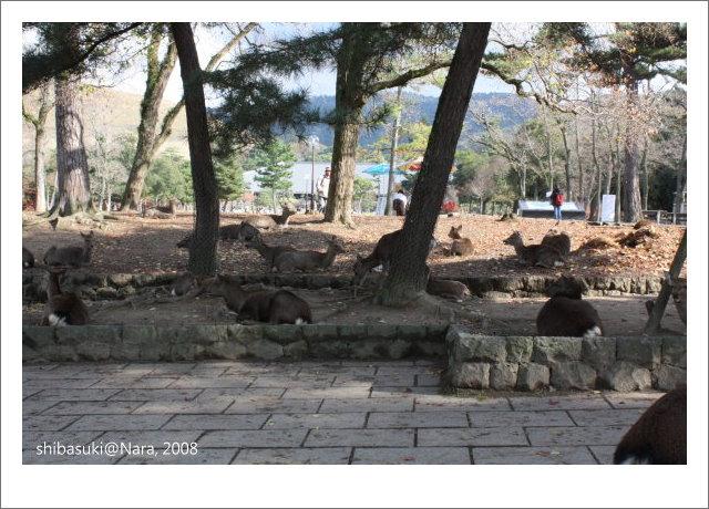 20081128_奈良-16.JPG