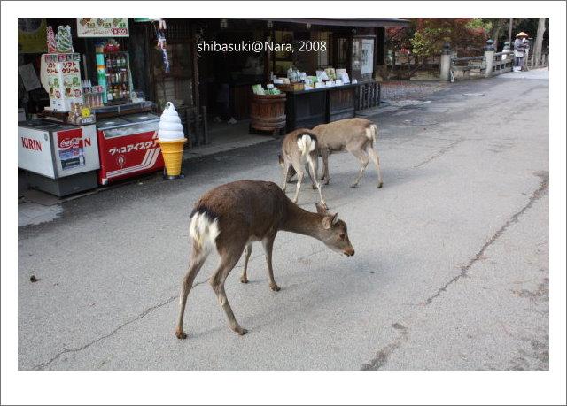 20081128_奈良-42_東大寺.JPG