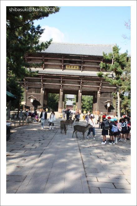 20081128_奈良-50_東大寺.JPG