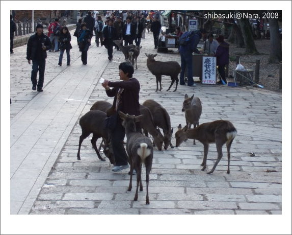 20081128_奈良-56_東大寺.JPG
