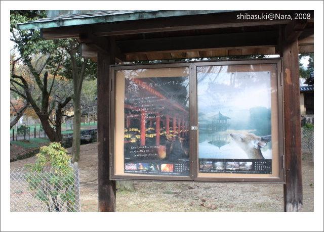 20081128_奈良-59_東大寺.JPG