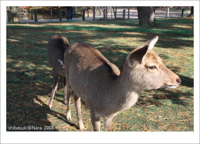 20081128_奈良-61_東大寺.JPG
