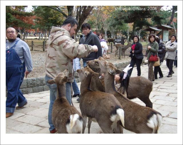 20081128_奈良-84_東大寺.JPG