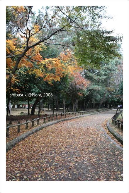 20081128_奈良-91_春日大社.JPG