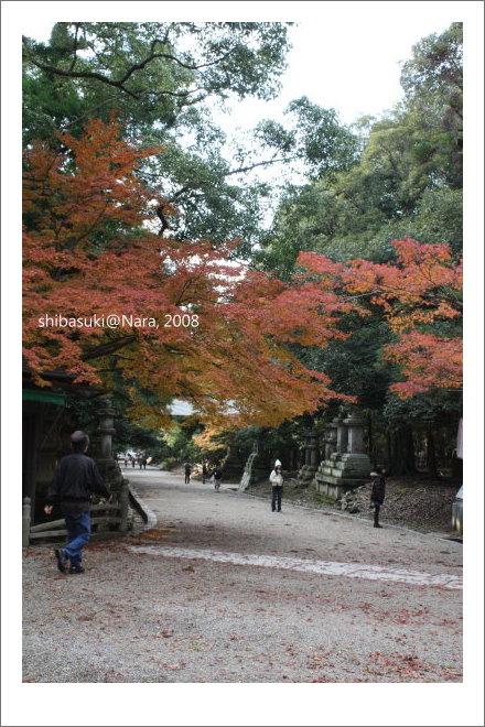 20081128_奈良-92_春日大社.JPG