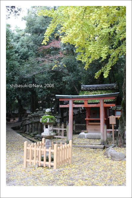 20081128_奈良-97_春日大社.JPG