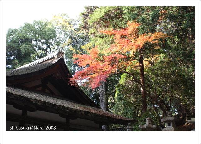 20081128_奈良-107_春日大社.JPG