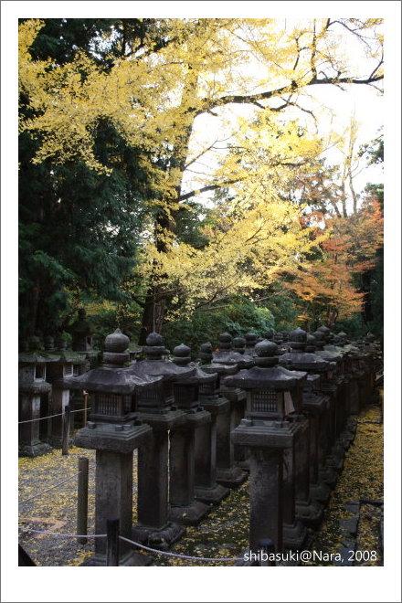 20081128_奈良-133_春日大社.JPG