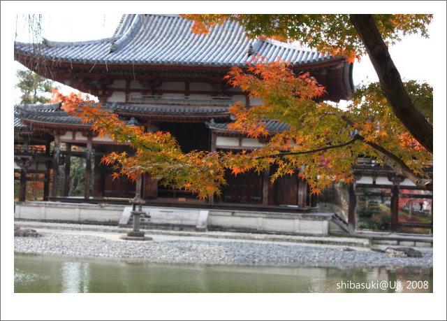 20081129_宇治-31_平等院.JPG