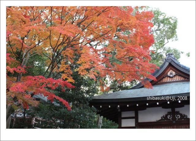 20081129_宇治-90_宇治神社.JPG