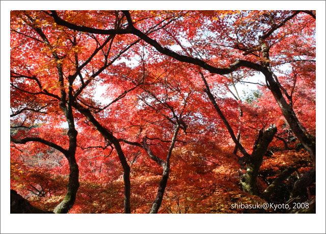20081130_Kyoto-6_清水寺.JPG