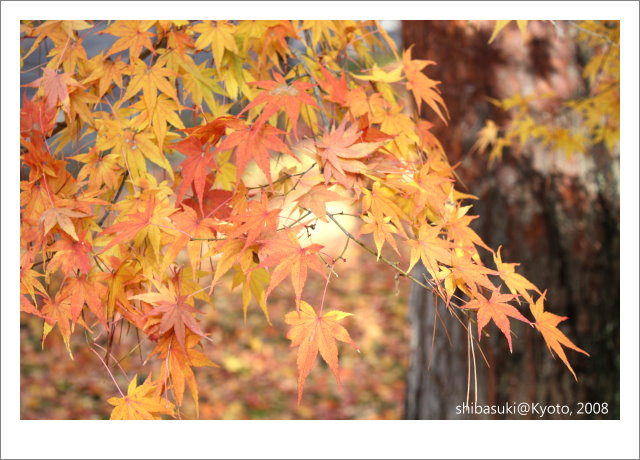 20081125_Kyoto-88_南禪寺.jpg