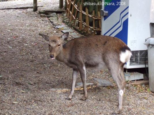 20081128_奈良-106_春日大社.JPG