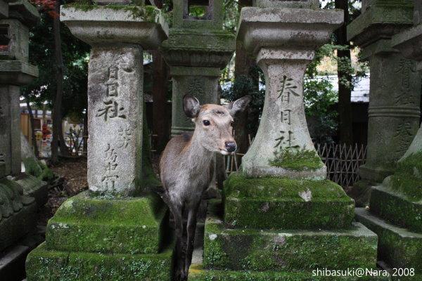 20081128_奈良-98_春日大社.JPG
