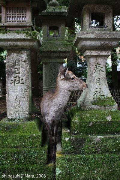 20081128_奈良-99_春日大社.JPG