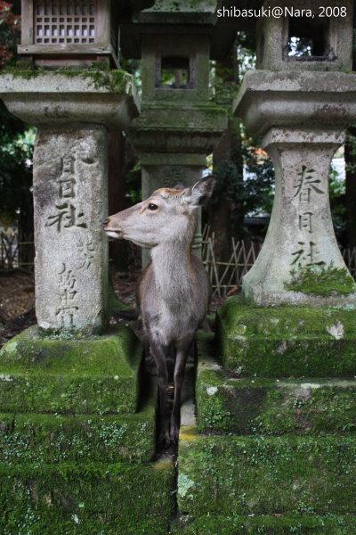 20081128_奈良-100_春日大社.JPG