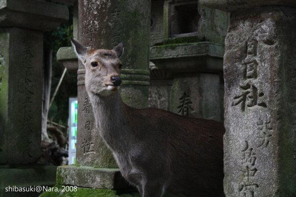 20081128_奈良-103_春日大社.jpg