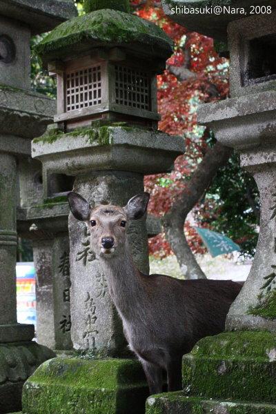 20081128_奈良-102_春日大社.jpg